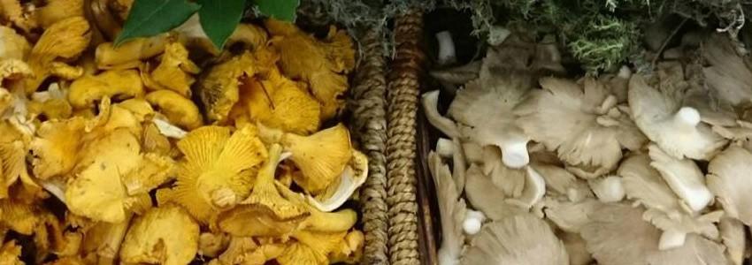 Une sélection des saveurs automnales forestières.