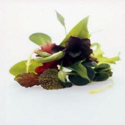 Salade Mesclum