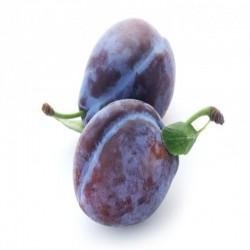 Prune Quetche