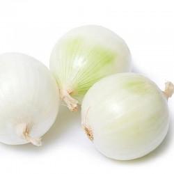 Oignon Blanc Frais