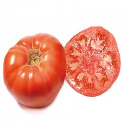 Tomate de Gout