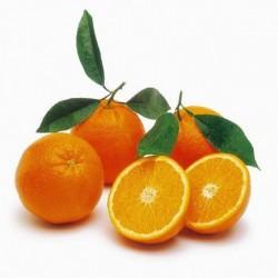 Orange Sicile