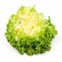 Salade Frisee