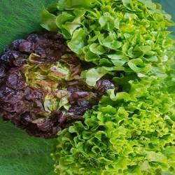 PROMO 3 Salades