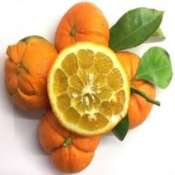 Orange amere